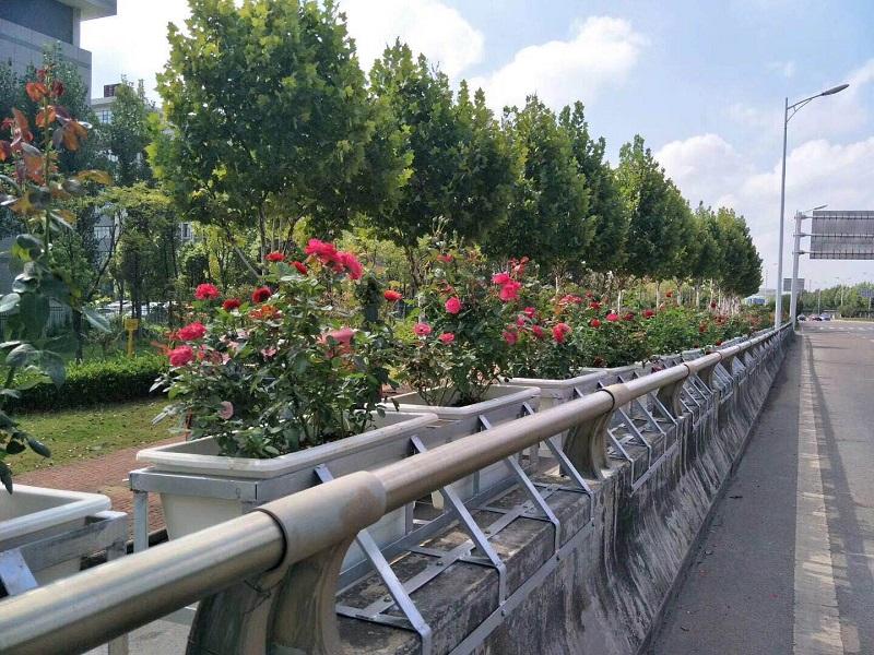 高架桥花盆.jpg